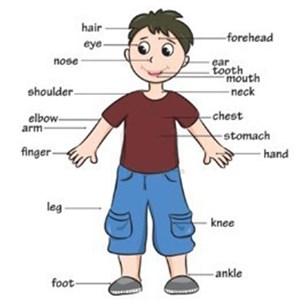 part of body