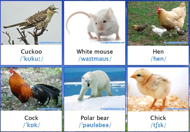 980 Gambar Hewan Beserta Nama Dalam Bahasa Inggris Gratis